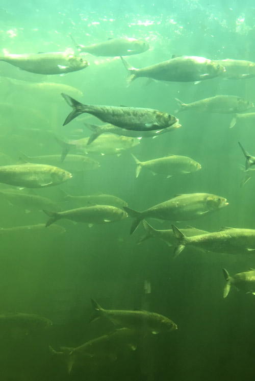 /site/navtopic_2.jpg Local Services